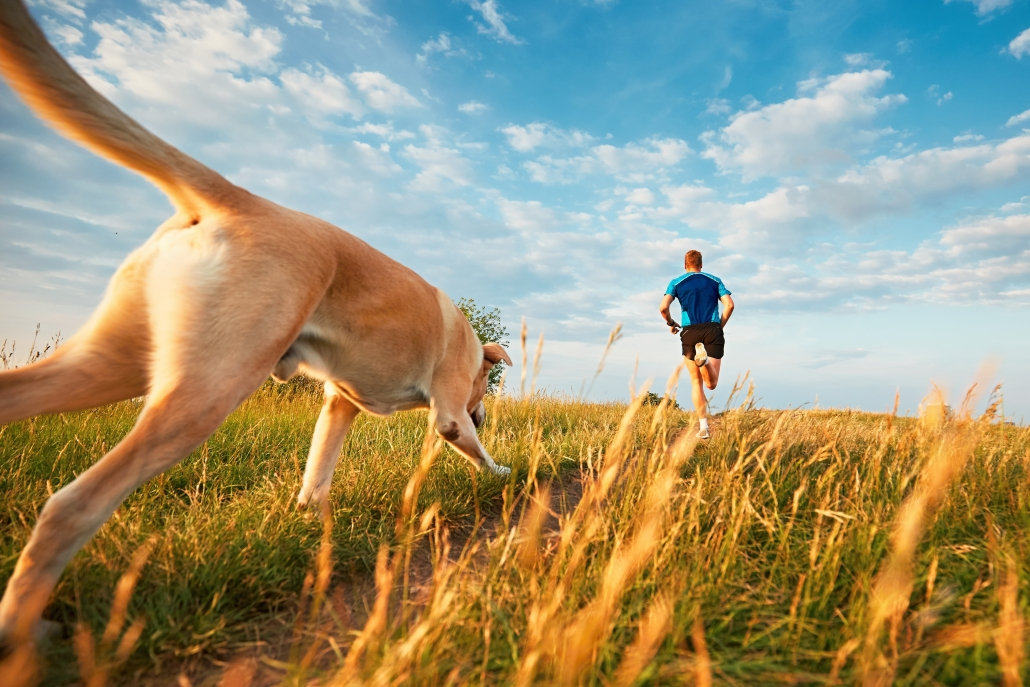Dogs can improve your health and join you for a run.