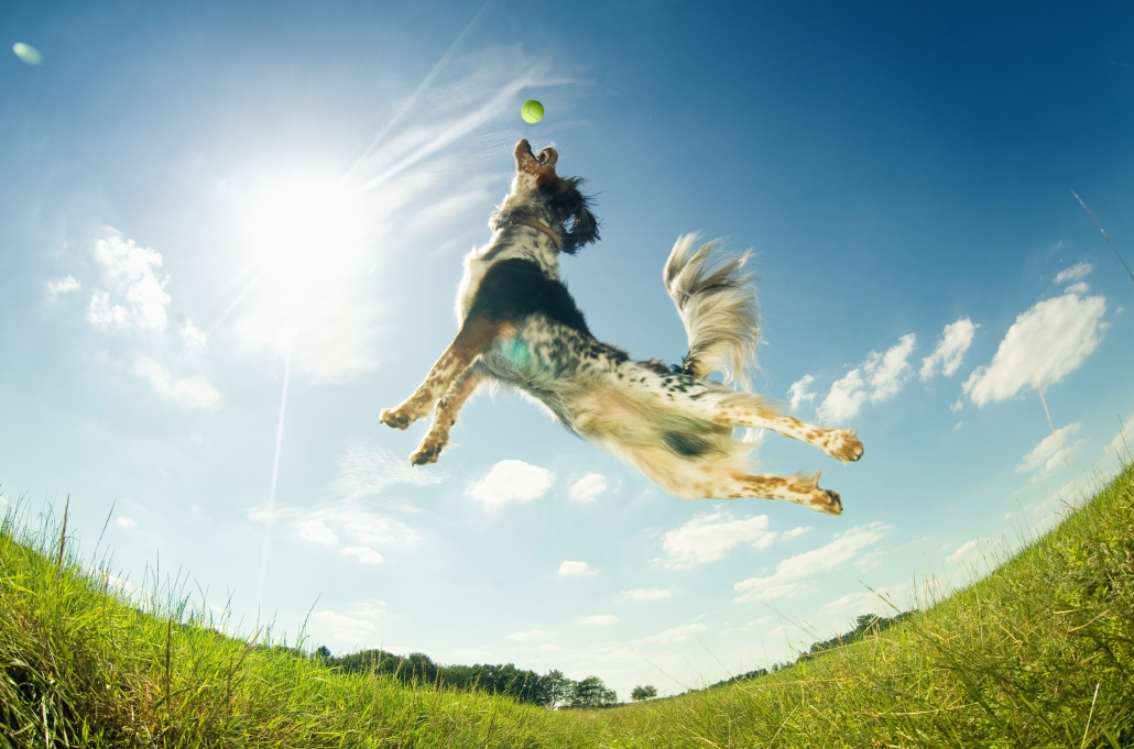 Dogs can improve your health and are pretty good athletes in their own right.